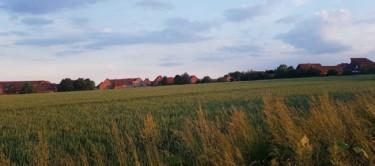 Hohnhorst Feldmark